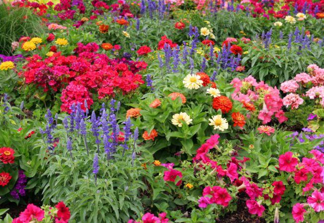 Florile Simbolul Perfect Al Primăverii Luna Cadourilor Se